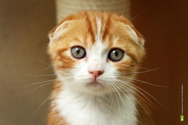 У кота Портала 66.ru и Работы 66 появилось имя и страница в соцсетях