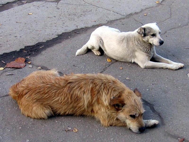 В Англии всем собакам поставят микрочипы