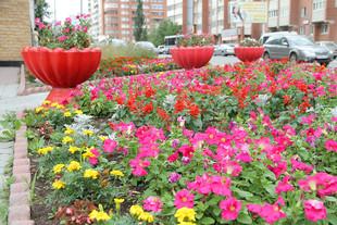 Городские власти наградят самые цветущие районы
