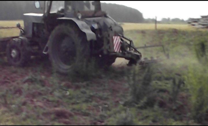 Областные полицейские нашли еще одно конопляное поле. В Сухом Логу