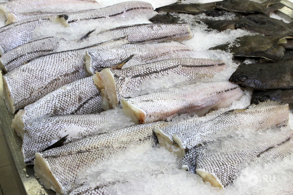 За «Экспо-2020» будет агитировать мертвая рыба