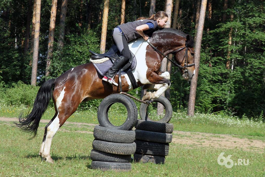 Самая красивая лошадь получит седло за 2 тыс. долларов от известного екатеринбургского ювелира