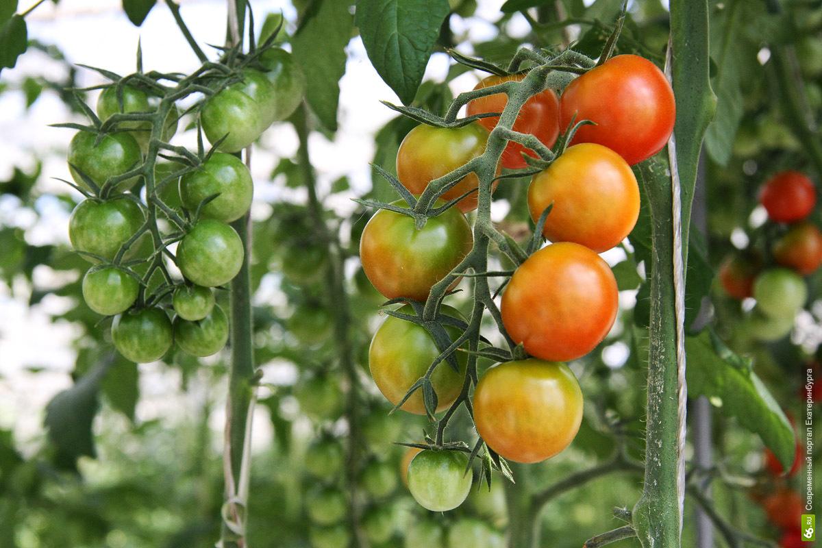 На сельское хозяйство область потратит 3,6 млрд рублей