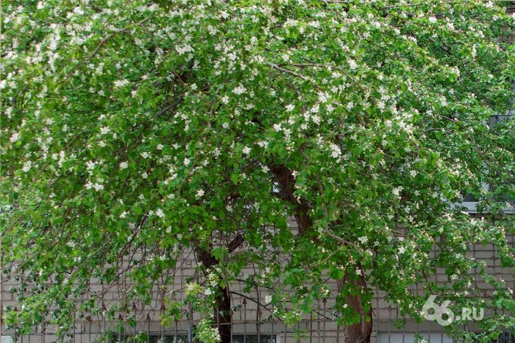 Новая неделя порадует Екатеринбург почти летней погодой