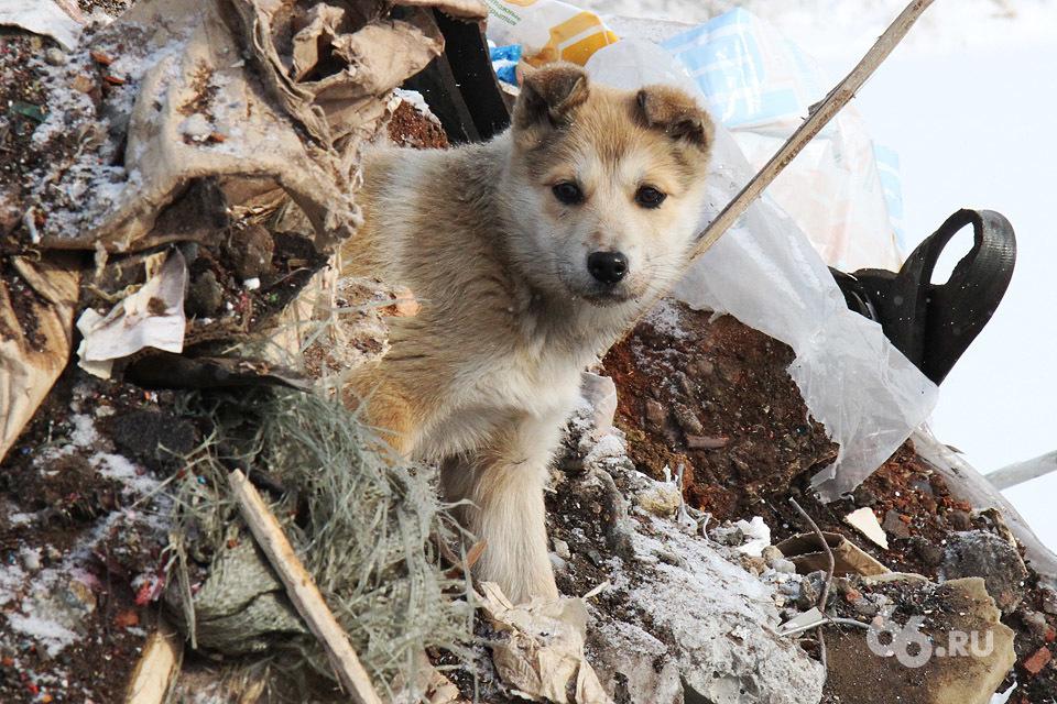 В Екатеринбурге появятся беби-боксы для животных