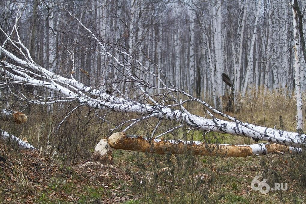 Свердловское МЧС ищет пропавшего грибника