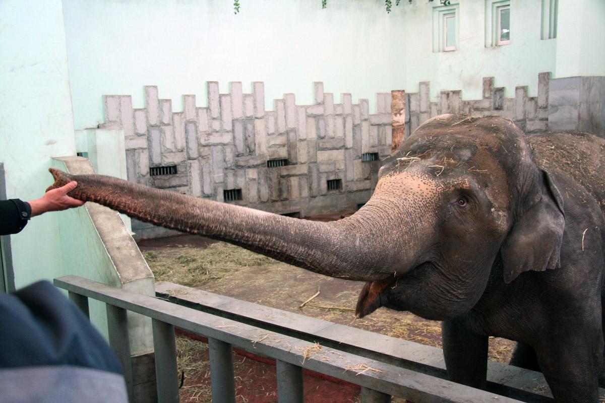 Бассейн слонихи Даши перекрасят в оранжевый цвет