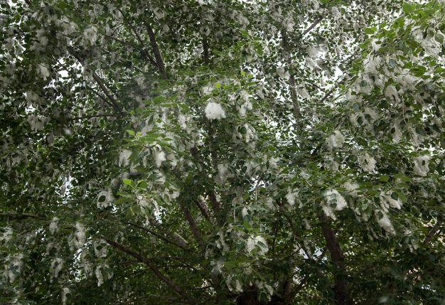 Мэрия обещает посадить 2 тысячи деревьев в этом году