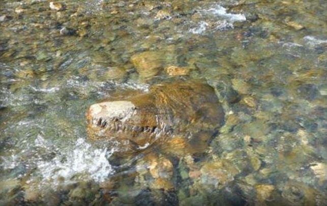 «Морской ящер. Однозначно!» Ученые опознали древний череп на дне уральской реки