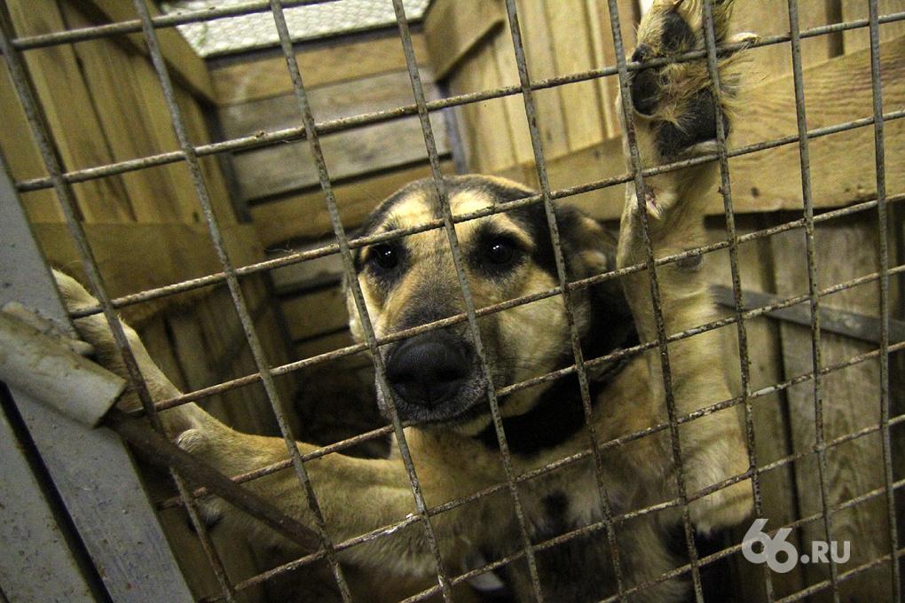 За месяц в Екатеринбурге отловили почти 400 бродячих собак