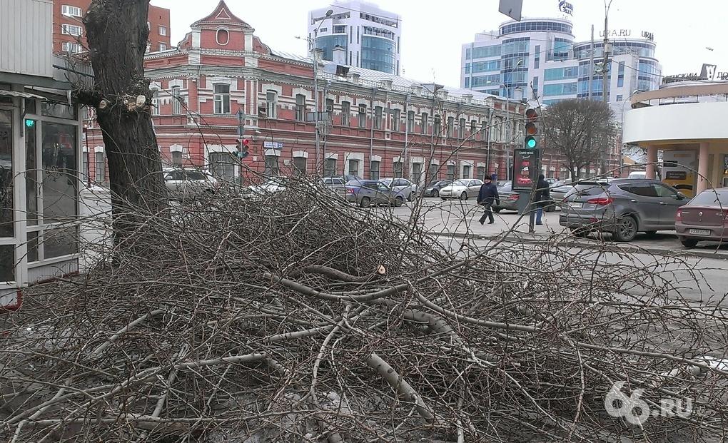 Тополя в Екатеринбурге: подстричь нельзя убрать