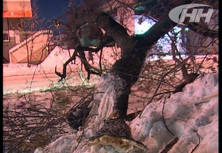Коммунальщики уронили дерево на Land Rover молодой екатеринбурженки
