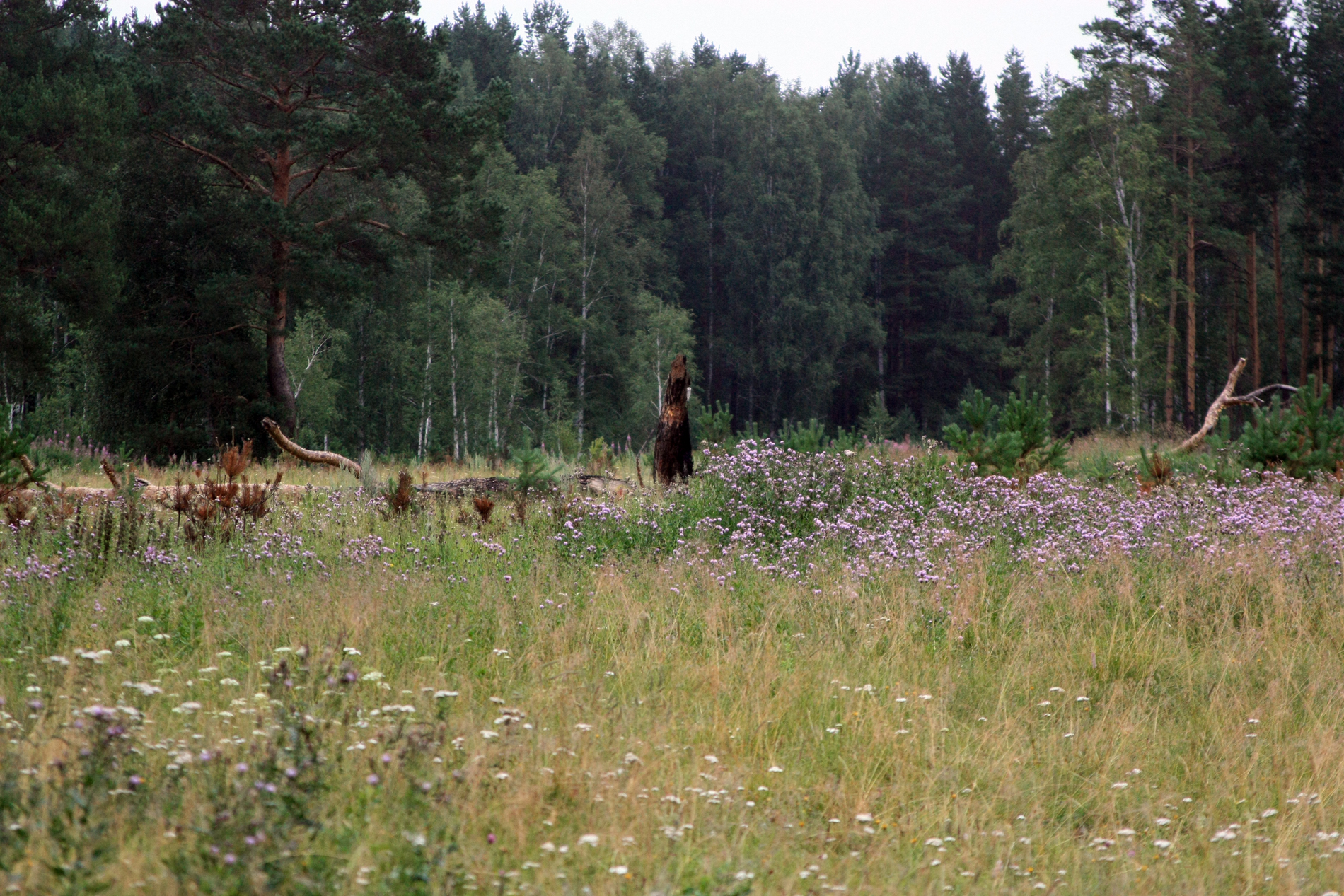 В лесу под Талицей три девушки попали в трясину