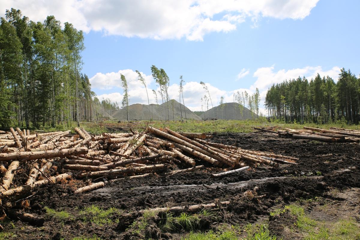 «Сожгу за грибы!» В лесу под Горным Щитом партизан ведет войну с дорожниками