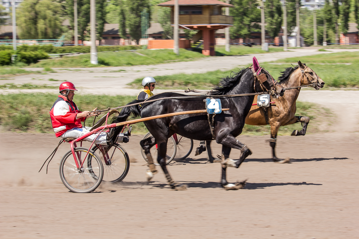 Полцарства за коня: играем на тотализаторе киевского ипподрома