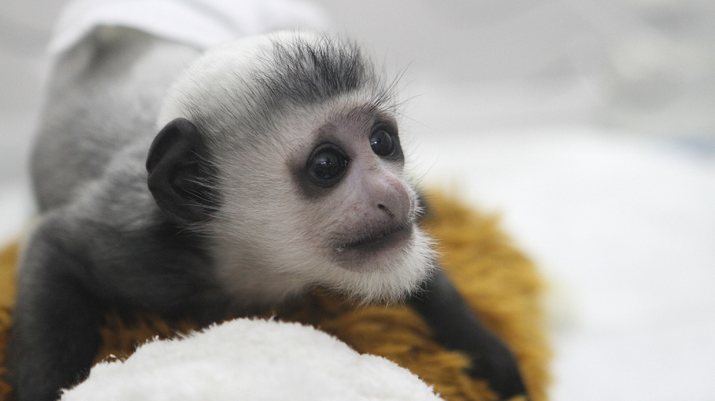 Взоопарке Екатеринбурга появится детский парк для обезьян