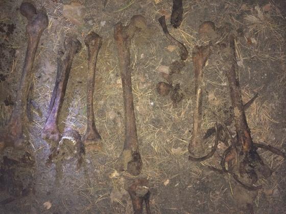 Разыскиваются родственники: следователи выясняют, чьи скелеты найдены на Уралмаше