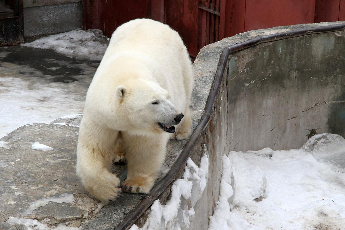 Обитатели екатеринбургского зоопарка станут звездами Интернета