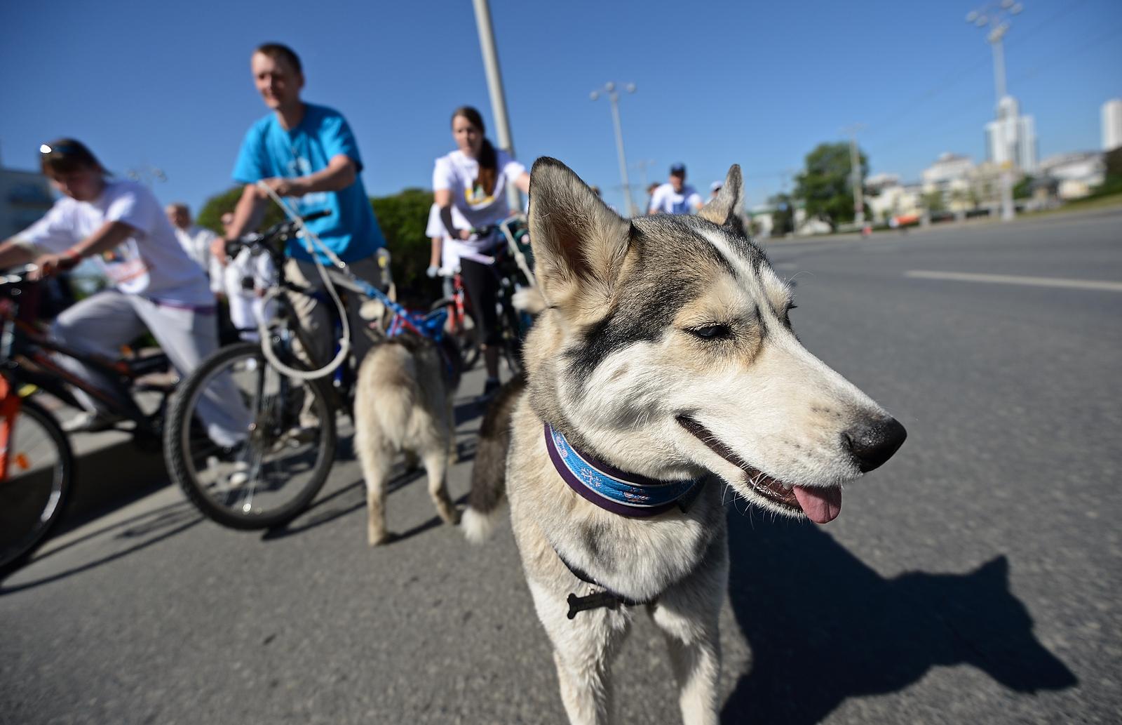 Зоозащитники приравняли собаку к оружию и отправили горожан на спецкурсы