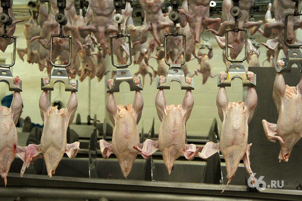Безопасность предпочли доходам: областное правительство не будет продавать птицефабрики