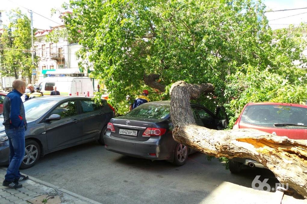 Гнилой тополь угробил автомобиль в центре Екатеринбурга