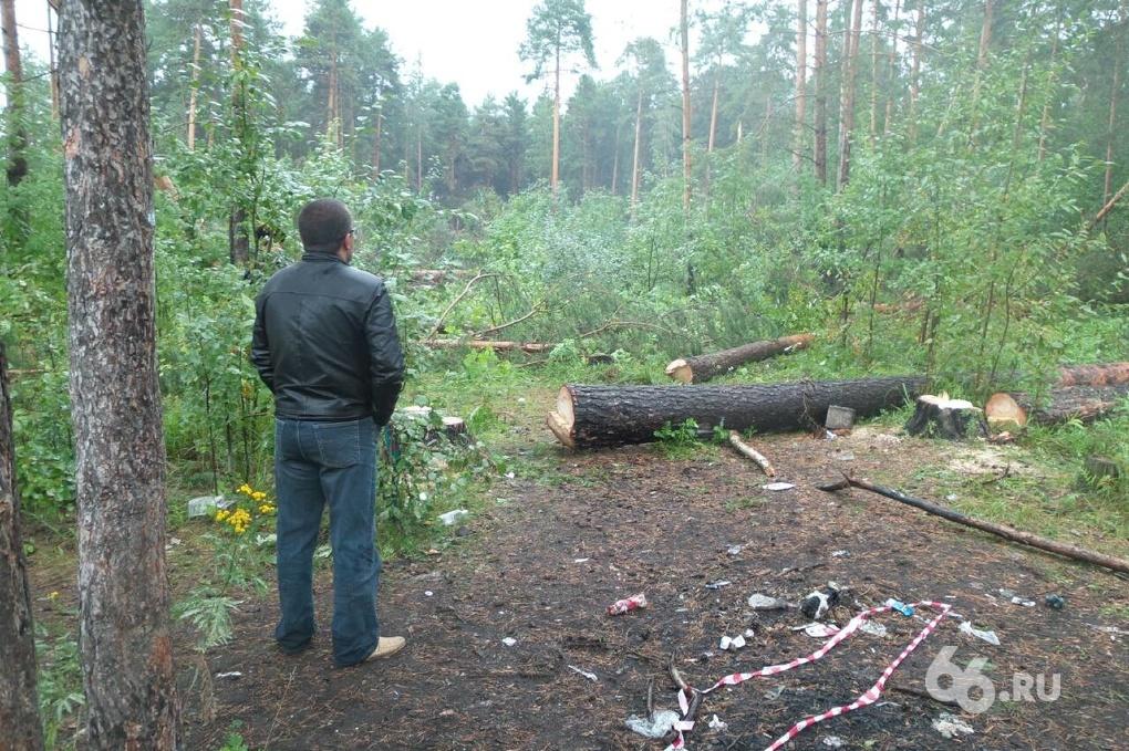 На Разливной валят лес. Местные жители бросаются под деревья