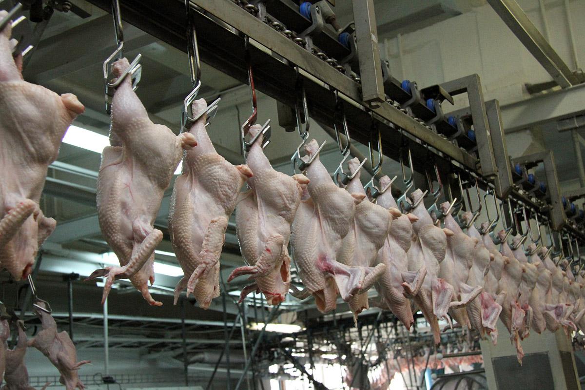 В Приморье задержали американских куриц-нелегалов