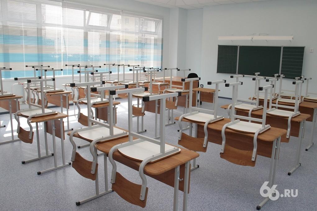 Вши атакуют: в элитной гимназии Екатеринбурга карантин из-за педикулеза