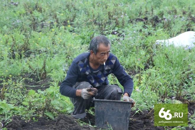 Пестициды и химикаты: китайцев-садоводов поймали за руку под Красноуфимском