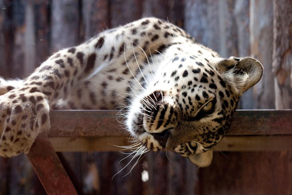 Котики захватят Екатеринбургский зоопарк, а затем и весь мир в первый день весны