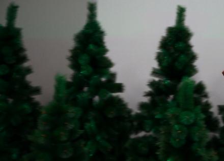 Многодетным екатеринбуржцам раздают живые елки