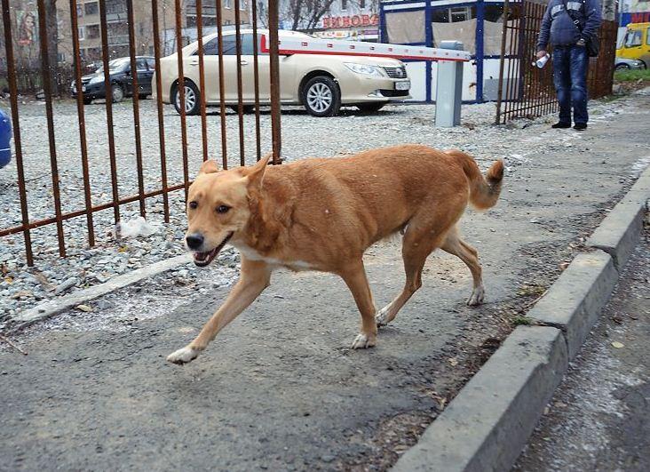 Городские чиновники попросили собаководов избавить город от фекалий
