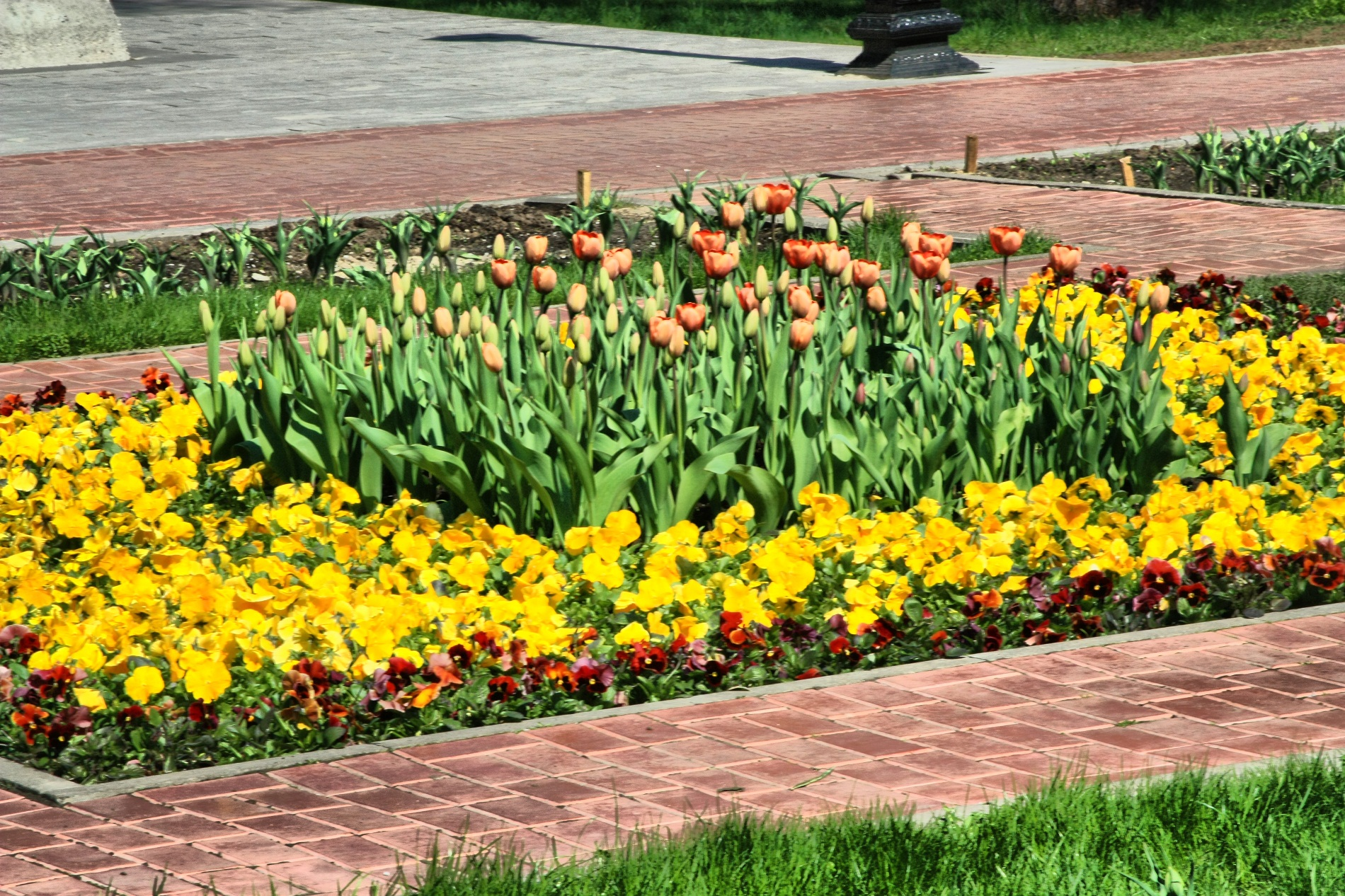 За месяц в Екатеринбурге посадят 1,5 млн цветов