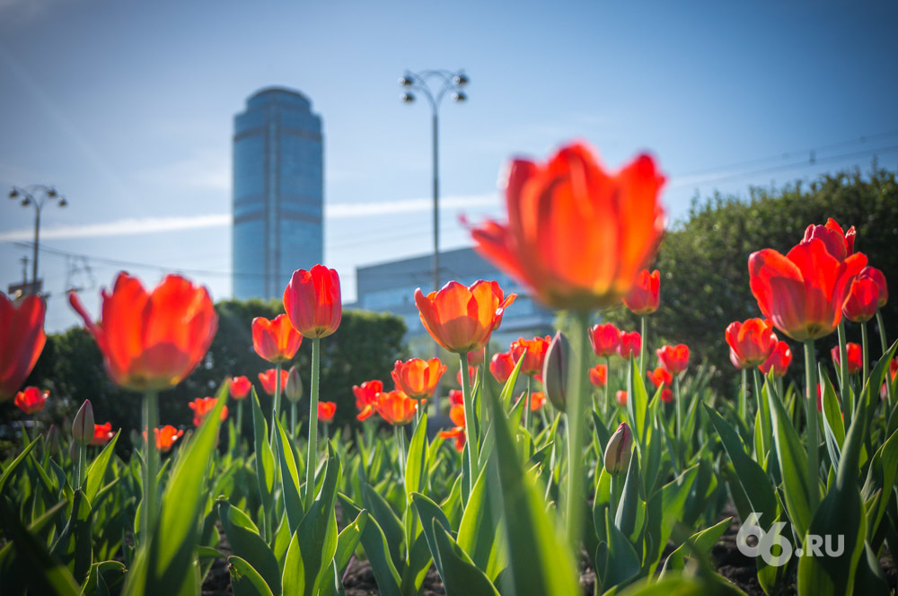 Нетипичные выходные: в Екатеринбурге будет солнечно и тепло