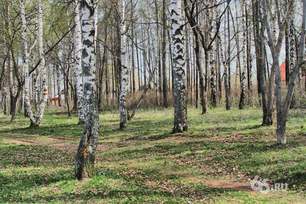 Парки и скверы Екатеринбурга начали обрабатывать против клещей