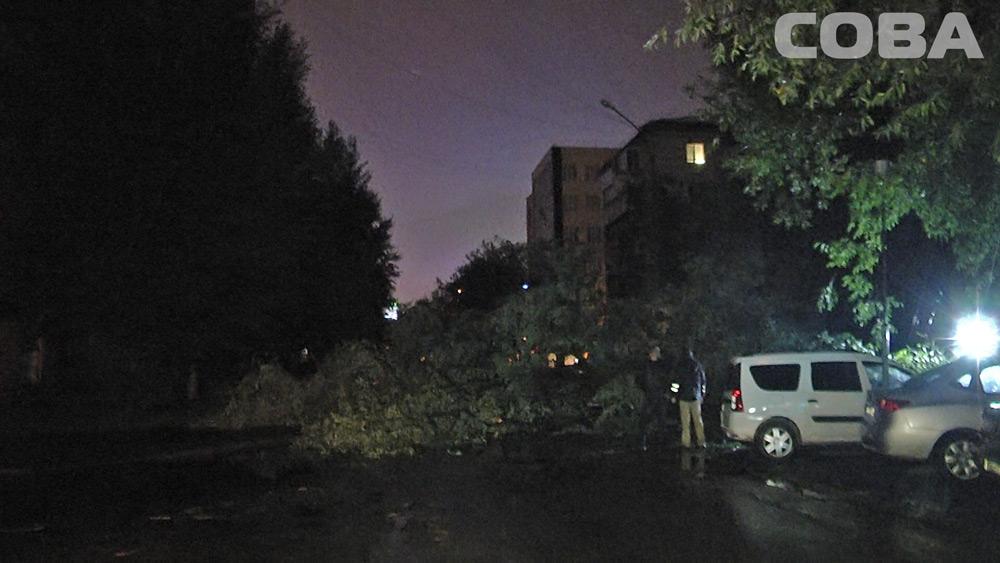 На Чайковского рухнувшее дерево повредило три машины