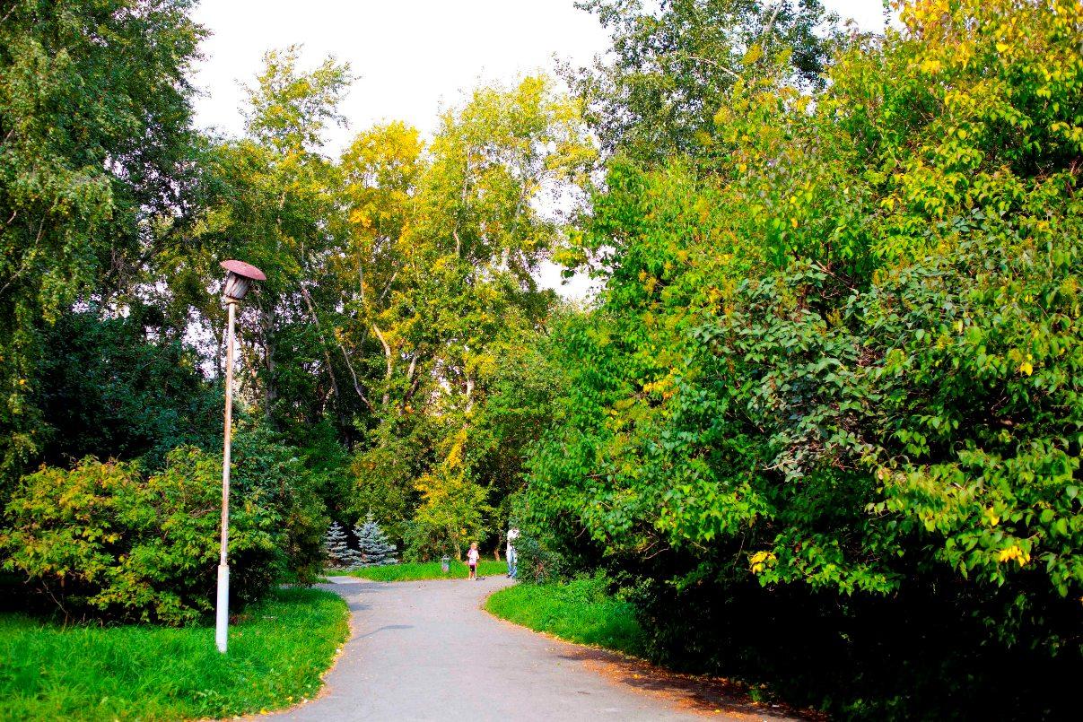 В Екатеринбурге 17 мая посадят более восьми тысяч деревьев