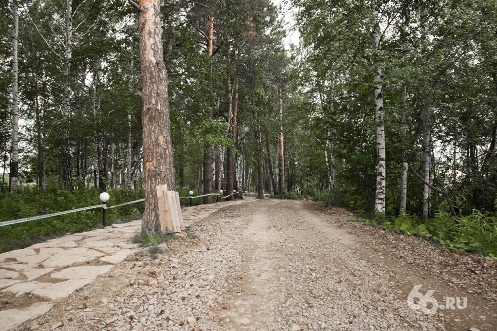 Роспотребнадзор обещает залить ядом для клещей городские парки