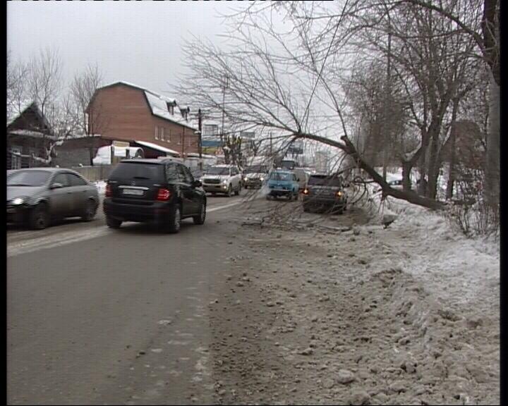 На Московской Range Rover уронил дерево поперек дороги