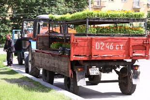 Цветы начали высаживать на клумбах Екатеринбурга