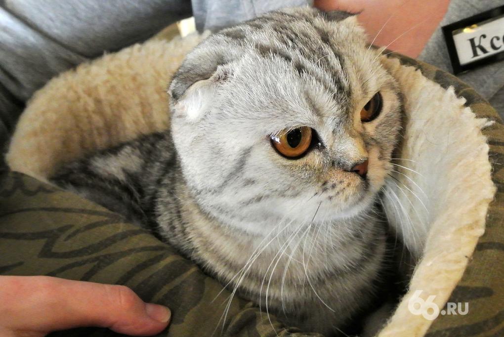 В екатеринбургском ресторане кошку посадили на диету