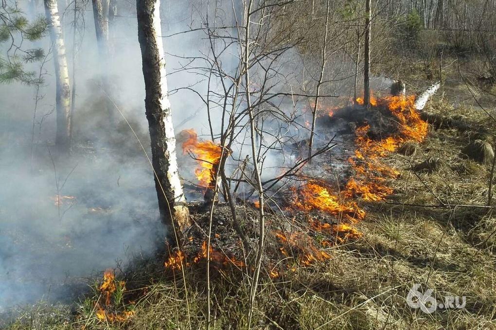 На выезде из Екатеринбурга полыхает настоящий лесной пожар
