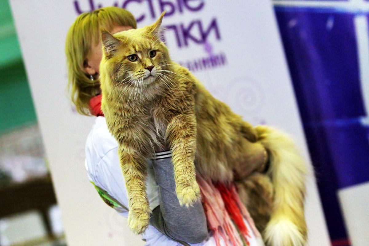 В Екатеринбурге выберут короля котов и королеву кошек