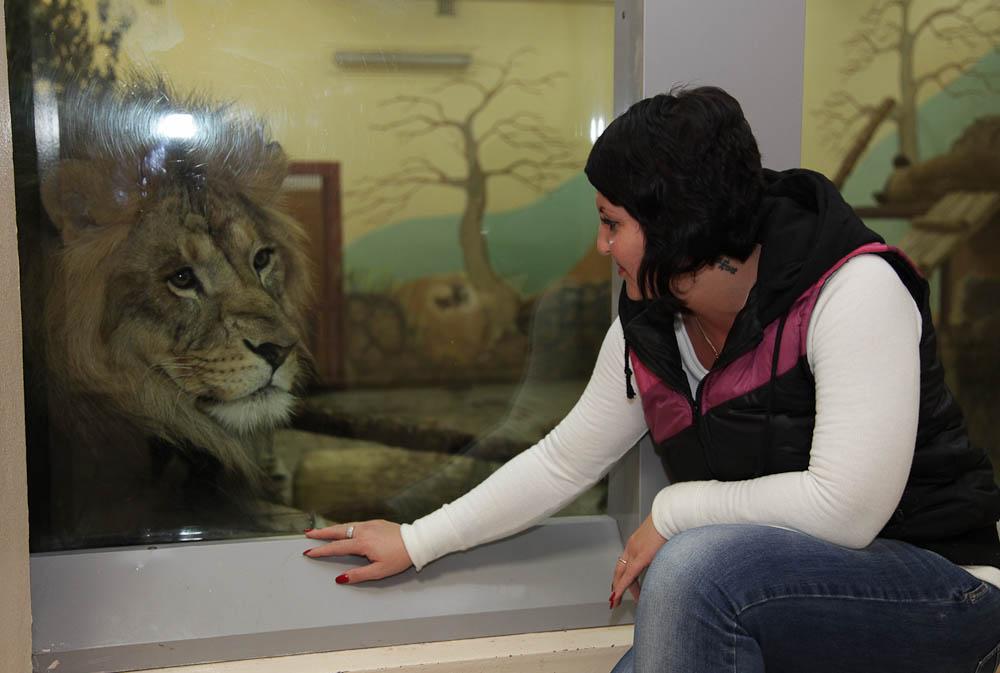 Обычный герой. «В центре Екатеринбурга зоопарку тесно: львам негде разгуляться»