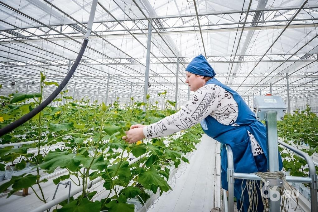 Средний Урал получит 977 млн рублей на развитие сельского хозяйства