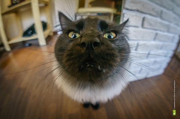 Даже котики не спасли. Кризис закрывает единственное котокафе Екатеринбурга
