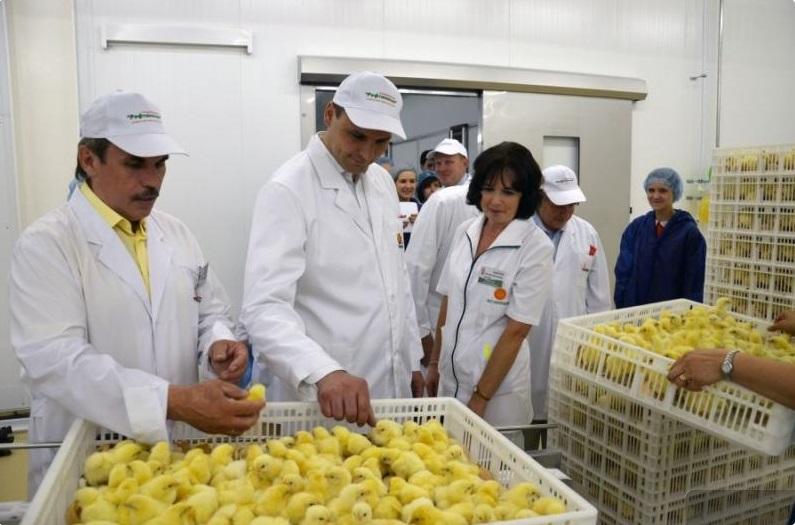 Премьер Паслер предложил отказаться от продажи Рефтинской птицефабрики