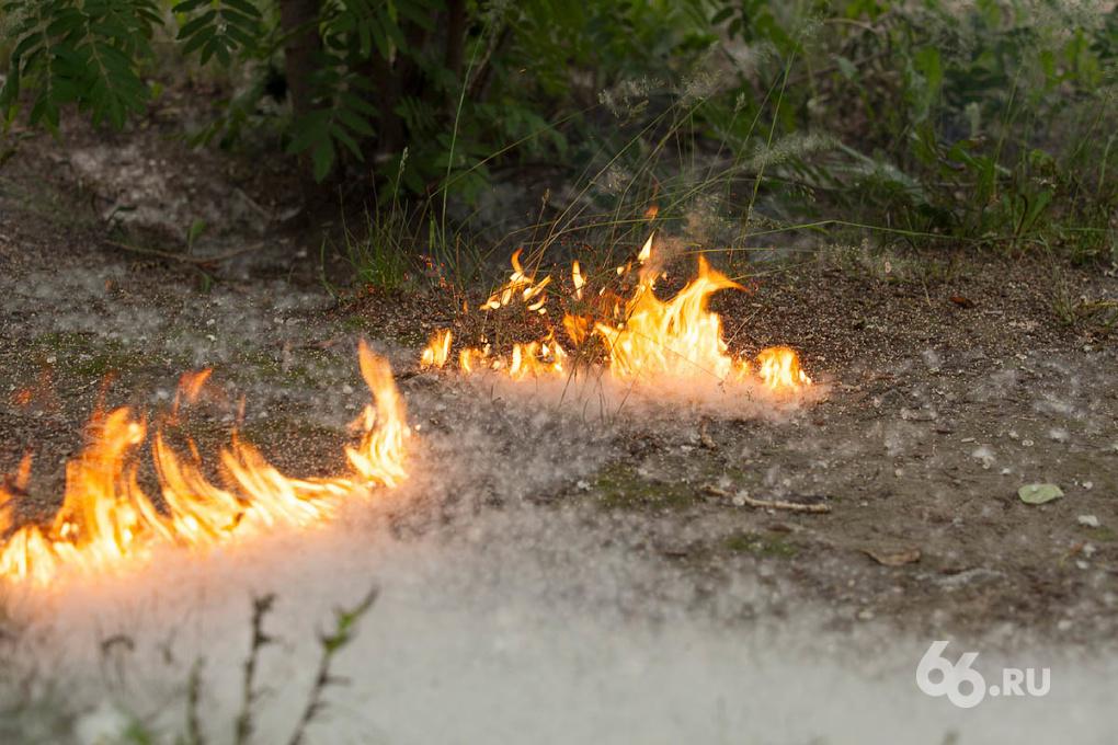 МЧС просит свердловчан не поджигать тополиный пух