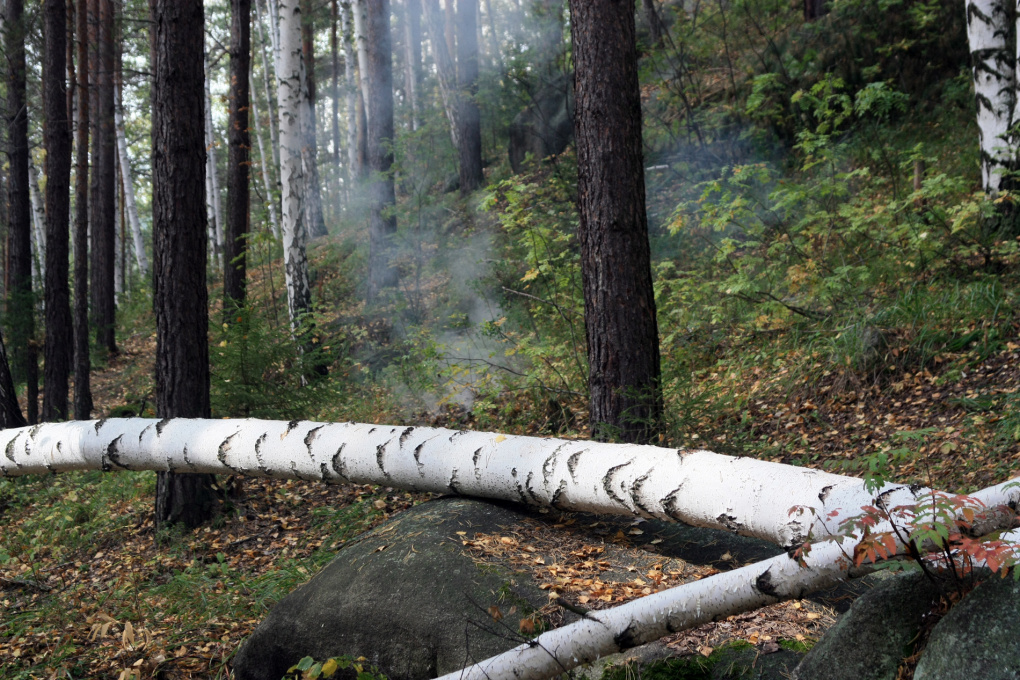 Штрафы за нарушение правил безопасности в свердловских лесах превысили миллион