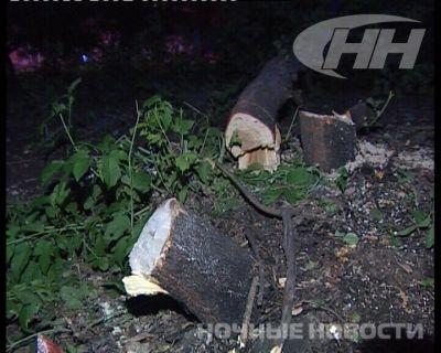 На Уралмаше по ночам вырубают деревья